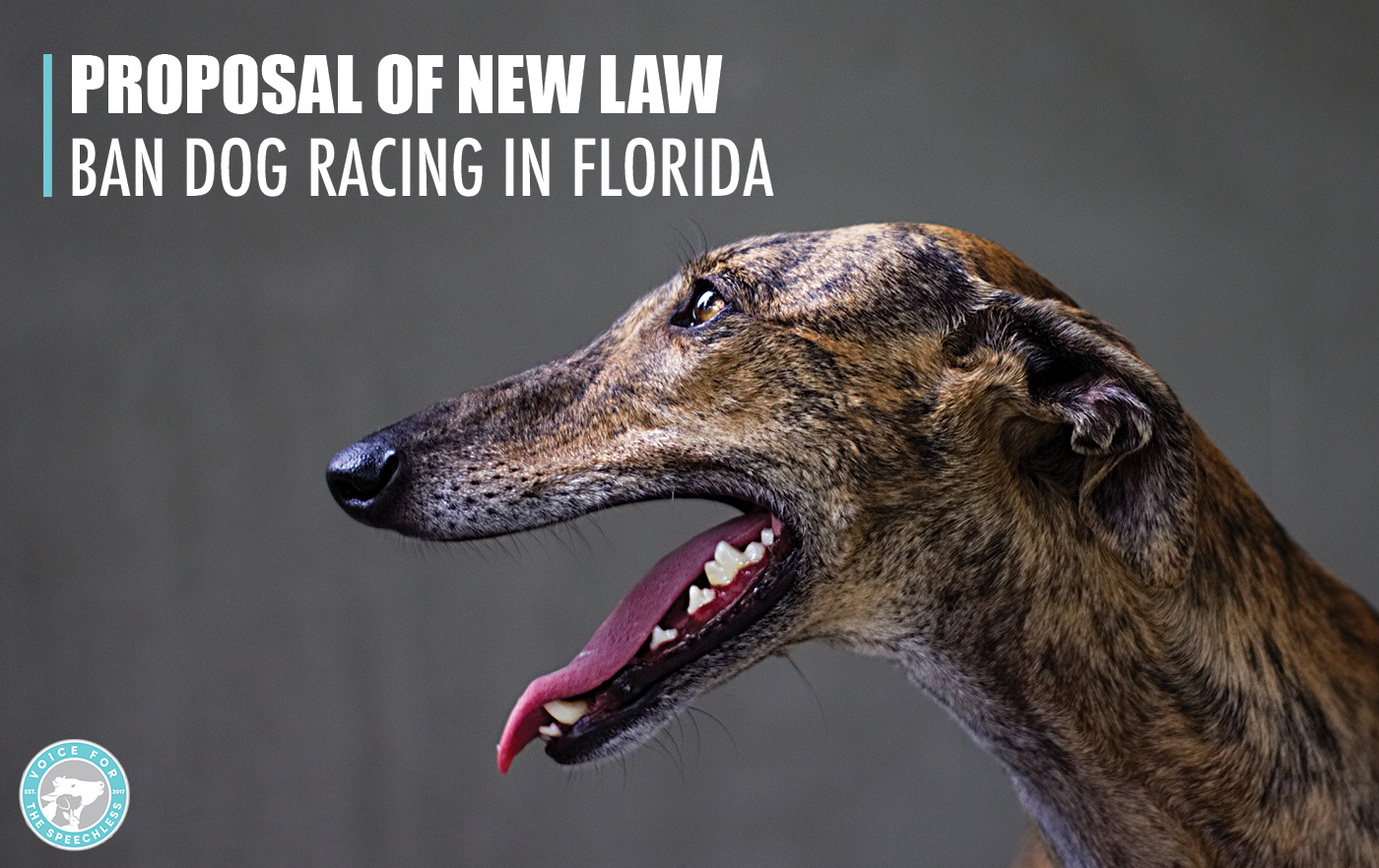 Proposal Of New Law That Would Ban Dog Racing In Florida