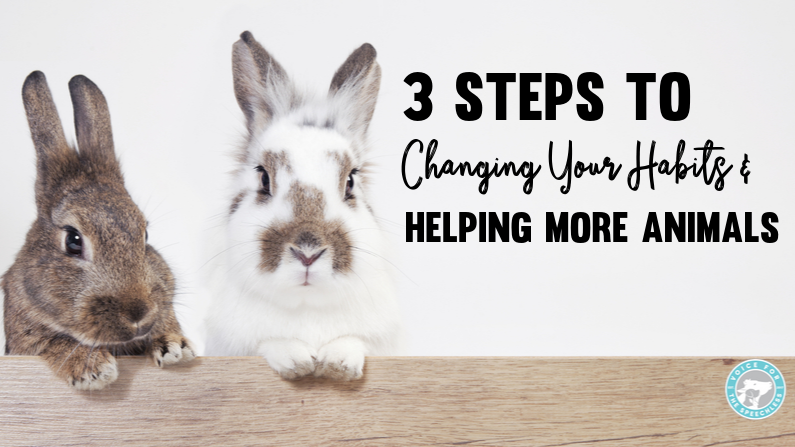 3 Steps to Changing Your Habits and Helping MORE Animals